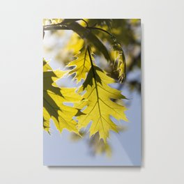 oak in spring Metal Print