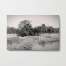 Summer in the Everglades Metal Print