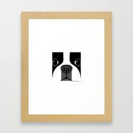 Boston Terrier Close Up Framed Art Print