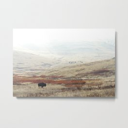 Lone Bison on National Bison Range in Montana Metal Print