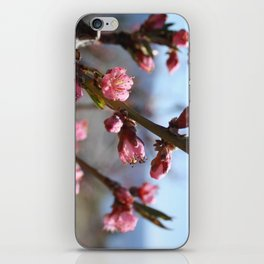 peach blossom iPhone Skin