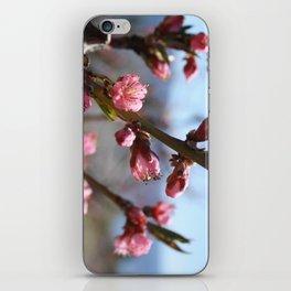 peach blossom iPhone Skin