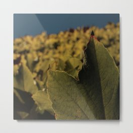 field of the leafs on the sky Metal Print