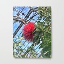 Powder Puff Plant Metal Print