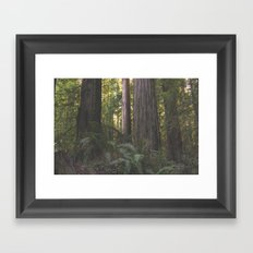 Into the Woods Forest Tree  Framed Art Print