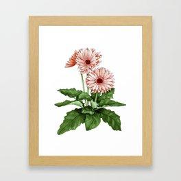 Gerbera Daisy Framed Art Print