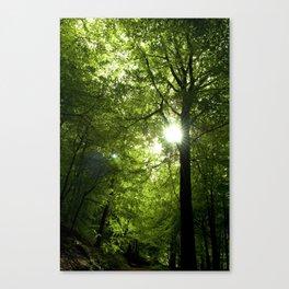 Sunshine through the trees. Canvas Print
