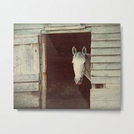 Peekaboo Mare // Horse Metal Print