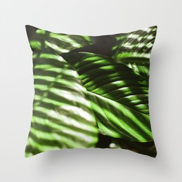 Afternoon Light on a Peace Lily Plant Throw Pillow
