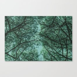 TREE 4.1 Canvas Print