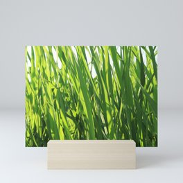 Large reeds leaves in a cane grove Mini Art Print