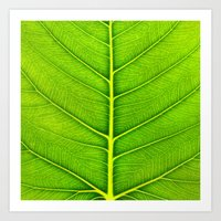leaf Art Prints featuring Leaf by Patterns and Textures