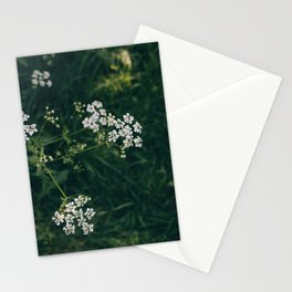 Wild Parsley Stationery Cards