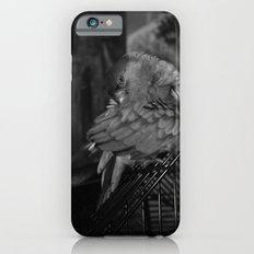 Senegal Parrot iPhone 6s Slim Case