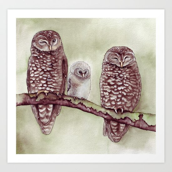 The Endangered Spotted Owl Art Print