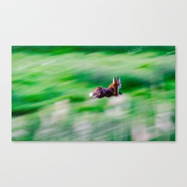 Fox on the run. Canvas Print