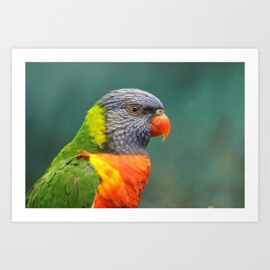 Rainbow Lorakeet  Art Print