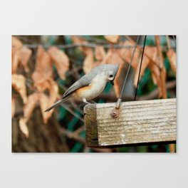 Is that all? Canvas Print