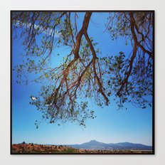 Oak Tree over Ghost Ranch, New Mexico Canvas Print