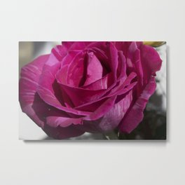 Valentine's Day Roses 26 Metal Print