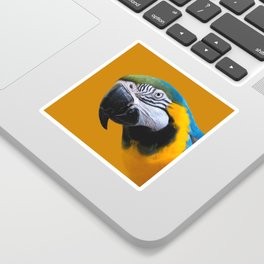 Macaw Parrot Photography | Exotic Bird | Tropical | Turquoise | Yellow | Art Print Sticker