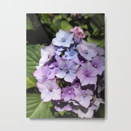Purple-blue and other colors flowers Metal Print