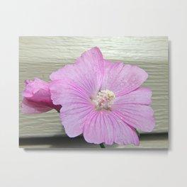 Pink Musk Mallow Pollen Overflow Metal Print