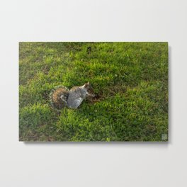 Squirrel Napoleon 01 Metal Print