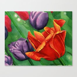 Red and Purple Tulips Canvas Print