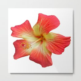 Gorgeous Red And Gold Hawaiian Hibiscus Flower No Text Metal Print