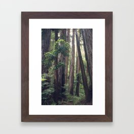 The Redwoods at Muir Woods Framed Art Print