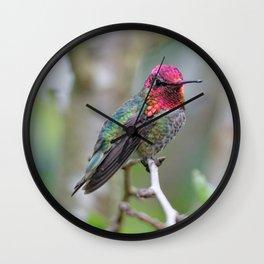 Anna's Hummingbird on the Plum Tree Wall Clock