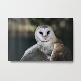 Common Barn Owl portrait. Metal Print