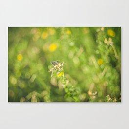 Little butterfly in flowery meadow Canvas Print