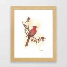 Red Cardinal Framed Art Print