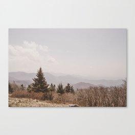Mountain Pine Canvas Print