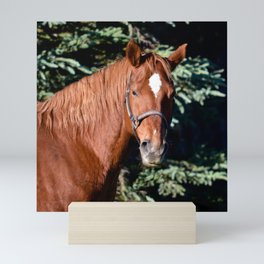 Miss Sadie - A horse, of course Mini Art Print