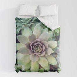 Succulent Garden II Comforters