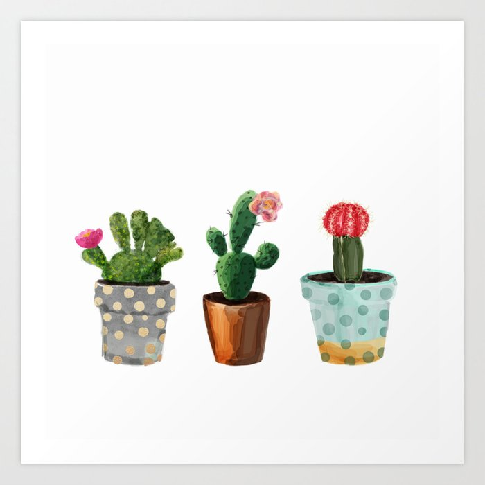 Three Cacti With Flowers On White Background Art Print By