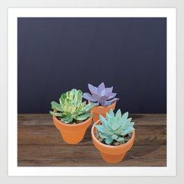 Trio of Small Succulents Art Print