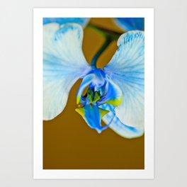 Orchid Artist Proof 6 Art Print