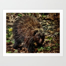 Quills of the Porcupine Art Print