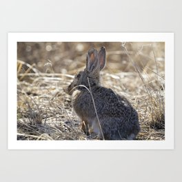 Bunny in the Bush Art Print