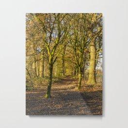 Path Through Autumn Woods Metal Print