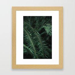 Forest Ferns Framed Art Print