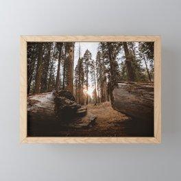 Light Between Fallen Sequoias Framed Mini Art Print