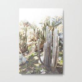 Silver Torch Cactus Metal Print