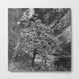 Tree in Killarney Metal Print