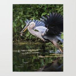 Heron Take-off Poster