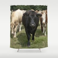 cows Shower Curtains featuring Cows by Rachel's Pet Portraits